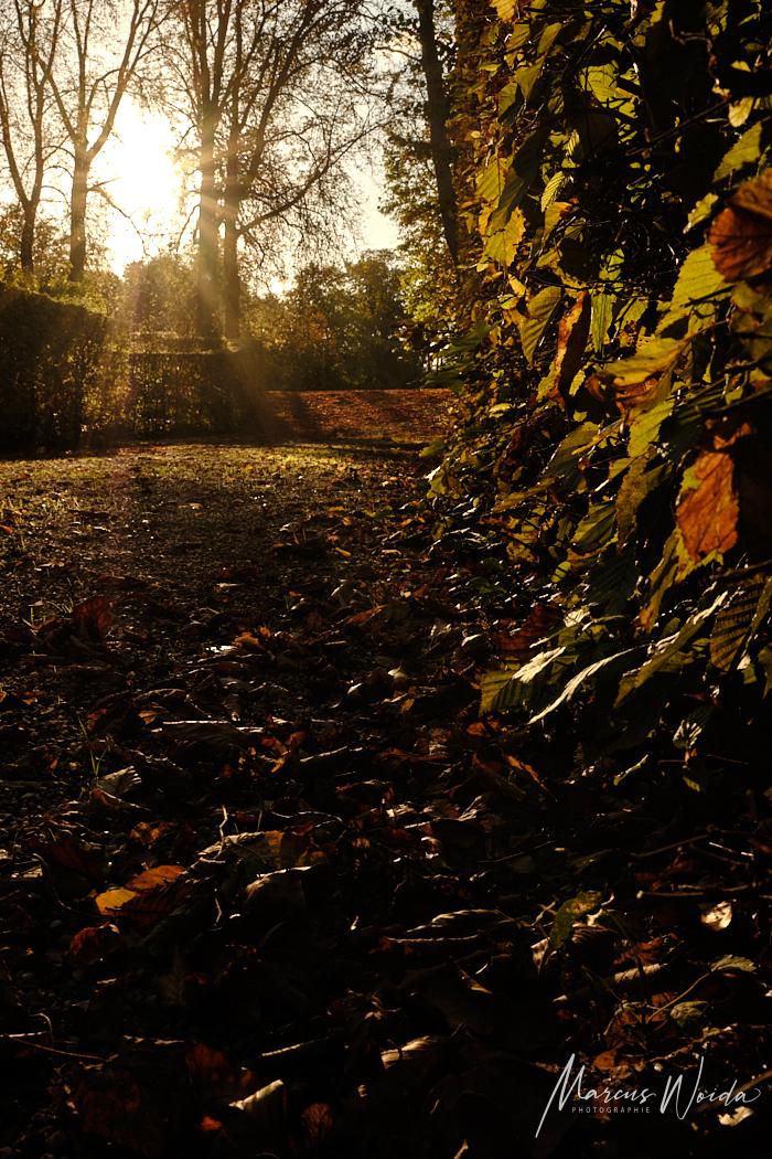 Goldene Stunde im Schlossgarten Schwetzingen